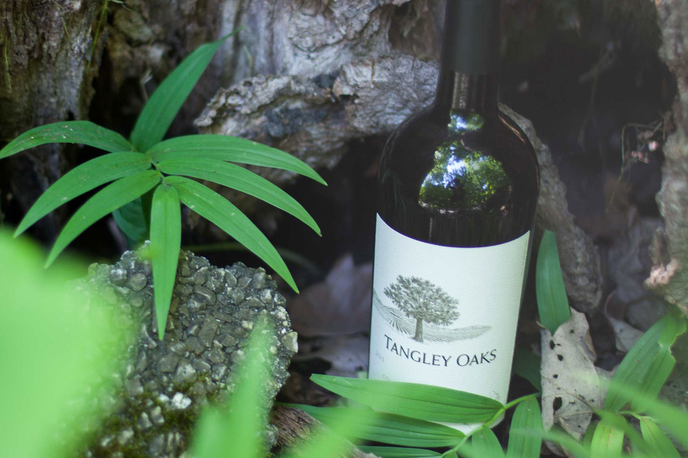 bottle of tangley oaks cabernet in the woods