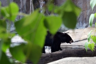 bear-photography-splenner