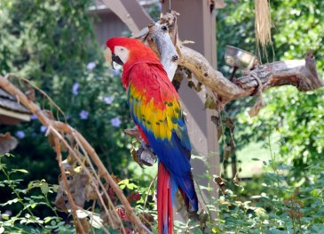 parrot-photography-splenner